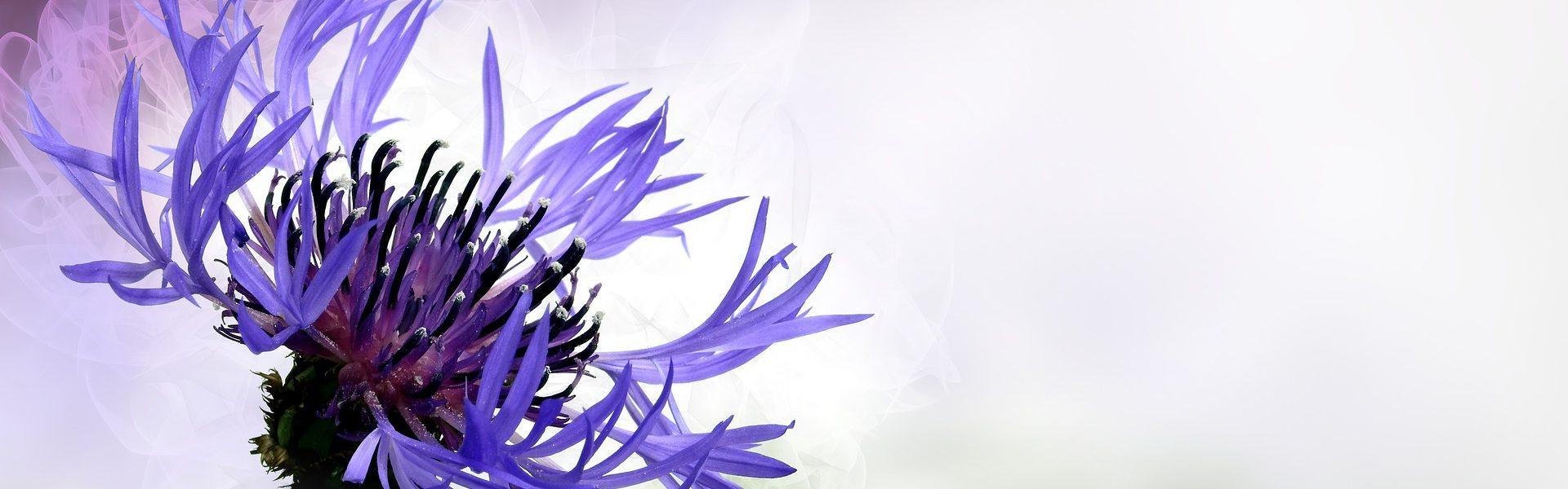 flower-1382493_1920