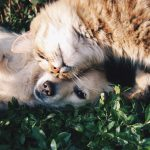 A Week's Worth of Journaling Prompts: On People and Pets