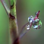 From Memories to Memoirs, Part 7: Creating Fresh Metaphor